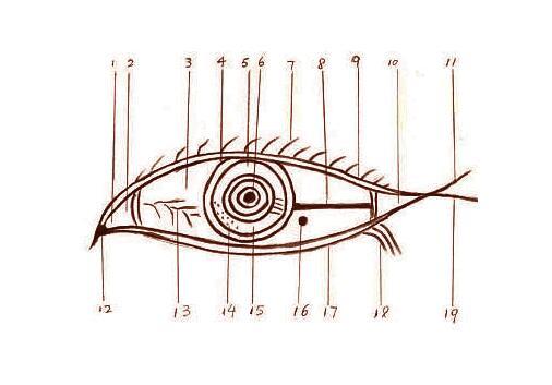 眼相:眼睛看相算命图解,眼睛的面相分析